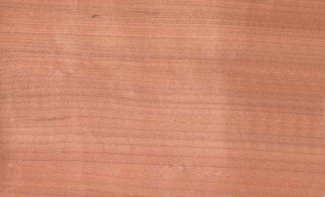 Prunus Avium - Merisier-