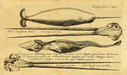canne,canne de marin,narval,licorne de mer,scrimshaw,armateur,licorne,baleinier,pêche,amiral,peter wood,sir henry raeburn