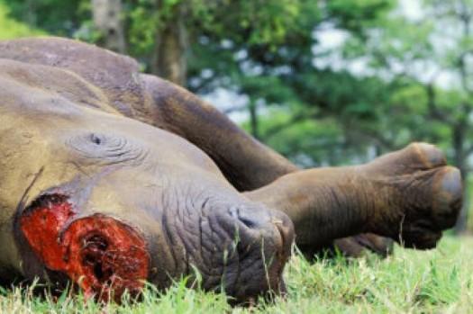 canne,ivoire,ivoire marin,éléphant,narval,cachalot,dents,matières protégées,cites,certificat,législation