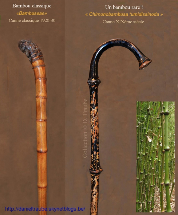 Canne, cane, walking stick, bambou rare, bamboo, canne ancienne,